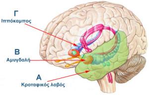 brain-abc